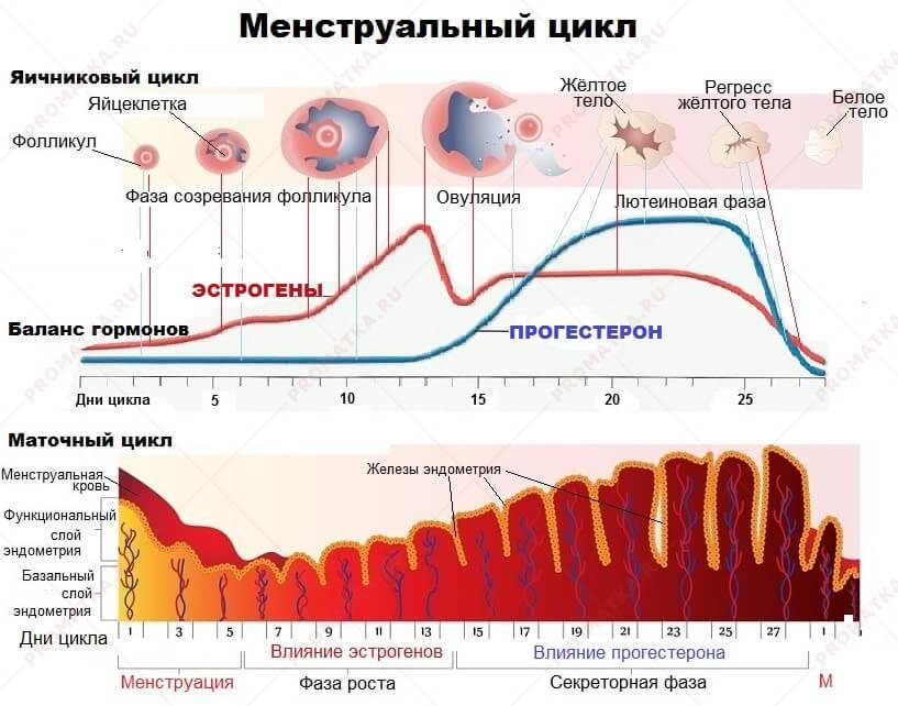Головокружение после менструационного цикла